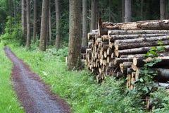 Sterta drewno w drewnach obrazy royalty free