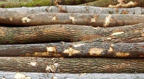 Sterta drzewo bele które cięli i wypiętrzali Fotografia Royalty Free