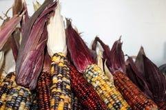 Sterta Indiańska kukurudza obraz royalty free