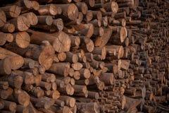 Sterta namorzynowy drewno dla robić kulinarnemu węglowi drzewnemu Obraz Royalty Free