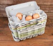 Sterta otwarci miąższowi jajeczni kartony z kilka kurczaków jajkami obraz royalty free