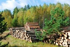 Sterta przygotowany drewno w europejskim lesie obrazy royalty free