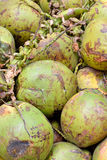 Cocoanut z surową pokrywą Fotografia Stock