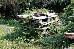 Sterta wieloskładnikowi drewniani barłogi przerastający z śpioszek roślinami otaczać z drzewami i inne rośliny w miejscowym upraw obrazy royalty free