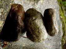 Sterta zen kamienie na skale przy magicznym miejscem w lesie zdjęcia royalty free