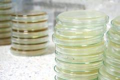 Sterty Petri naczynia przygotowywają dla nauki badania Obraz Stock