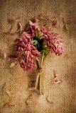 Stervende Dahlia Bouquet Stock Foto