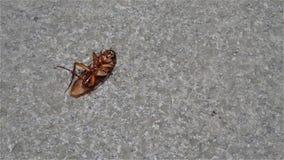 Stervende kakkerlak stock videobeelden