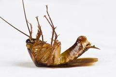 Stervende kakkerlak royalty-vrije stock foto