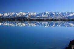 Stervende Zalm, Nieuw Zeeland Stock Foto's