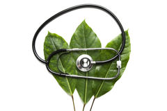 Stethoscope on leaves Royalty Free Stock Image