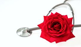 Stethoscope and red rose on white background. Stethoscope silver and grey with red rose on a white background Stock Photos