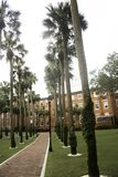 Stetson University in DeLand. Florida with a row of Palm Trees Royalty Free Stock Photo