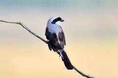 Steuerlicher Vogel auf einer Niederlassung Stockbild
