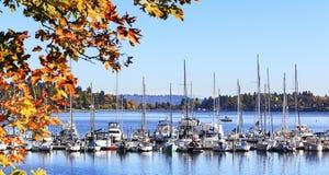 Steuermann Harbor Vashion Island Washington lizenzfreie stockbilder