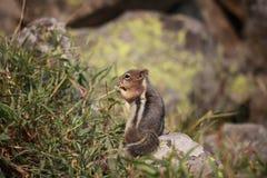 Steun van een eekhoorn royalty-vrije stock fotografie