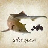 Steurvissen met zwarte kaviaar (acipenser) Vector illustratie Stock Foto's