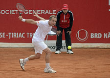 Steve Darcis Stock Images
