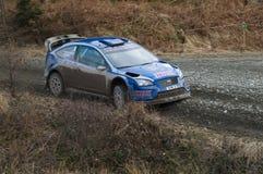 Steve Perez - Ford Focus WRC8 Royalty Free Stock Photos