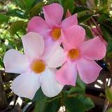 Steve& x27; s Installatie: Drie Roze Bloemen Royalty-vrije Stock Fotografie