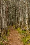 Steve`s Trail to South side of Broom Point, Gros, Morne, Newfoun royalty free stock images