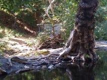 Stevens träd royaltyfria foton