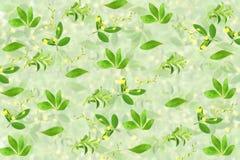 Stevia και άλλο υπόβαθρο εγκαταστάσεων για την υγιή φυσική έννοια τροφίμων Στοκ φωτογραφία με δικαίωμα ελεύθερης χρήσης