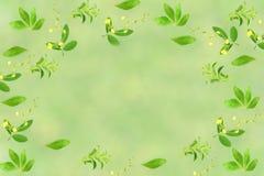 Stevia και άλλο υπόβαθρο εγκαταστάσεων με το διάστημα κειμένων για την υγιή φυσική έννοια τροφίμων Στοκ Φωτογραφία