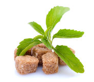 Stevia. Plant and brown sugar, isolated on white ground Royalty Free Stock Images
