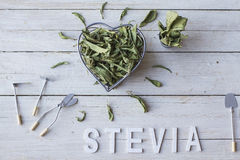 Stevia fotos de stock royalty free