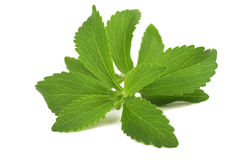 Stevia Immagini Stock