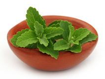 Stevia on a brown bowl Stock Photography