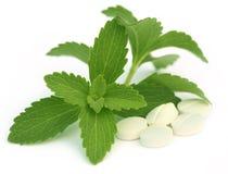 Stevia con las tabletas Fotos de archivo libres de regalías