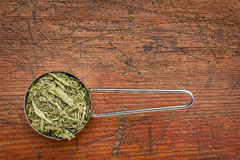 Stevia dried leaves Stock Image