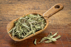 Stevia dried leaves. In a rustic wooden scoop- natural sweetener, sugar substitute Royalty Free Stock Images