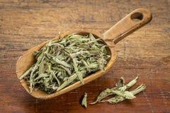 Stevia droge bladeren royalty-vrije stock afbeeldingen