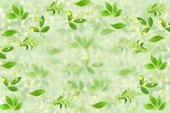 Stevia e l'altro fondo della pianta con lo spazio del testo per il concetto naturale sano dell'alimento Immagine Stock Libera da Diritti