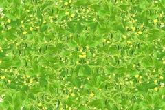 Stevia e l'altro fondo della pianta per il concetto naturale sano dell'alimento Fotografia Stock Libera da Diritti