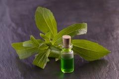 Stevia herb aroma  essence Stock Image