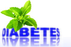 Stevia herb with diabetes word in pure white background Royalty Free Stock Image
