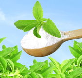 Stevia herb and extract powder in wooden spoon on sky background Stock Image
