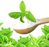 Stevia herb and extract powder in wooden spoon on white background Stock Photo