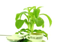 Stevia herb and powder Royalty Free Stock Photography