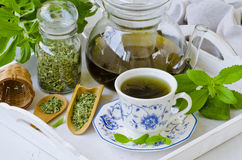 Stevia Infusion. Stock Images