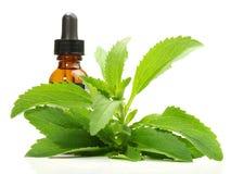 Stevia lämnar med flaskan - sund näring royaltyfria bilder