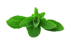 Stevia Leaves. Isolated on a white background with clipping path included Royalty Free Stock Photos