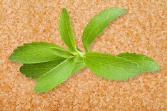 Stevia leaves Stock Image