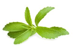 Stevia leaves Royalty Free Stock Image
