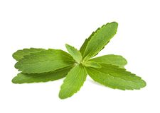 Stevia leaves Stock Photos