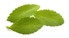 Stevia leaves. Isolated on white background Royalty Free Stock Photos